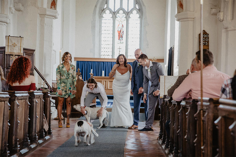 Dogs at weddings - Nicki Shea Photography